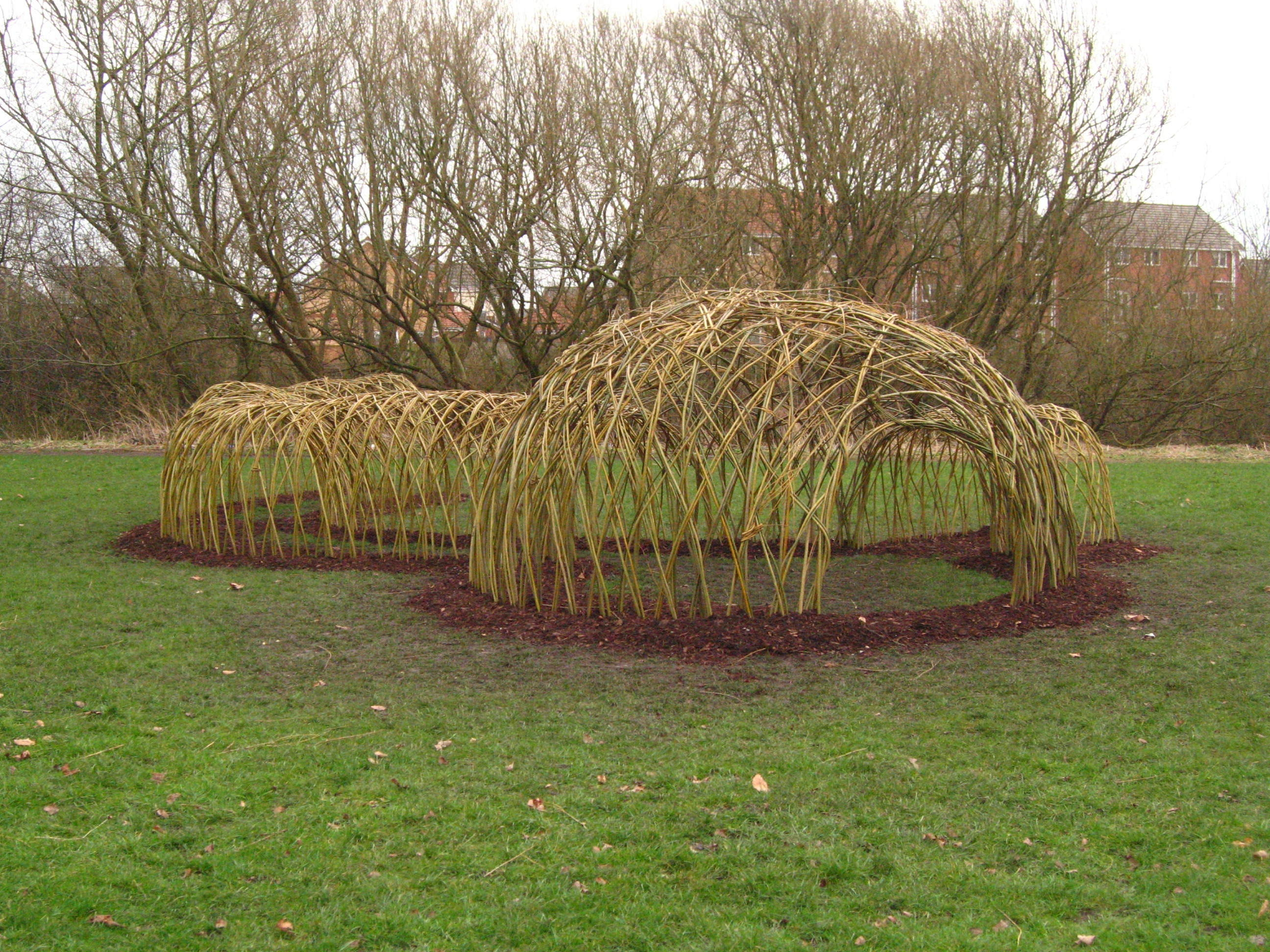 how to create a living willow tunnel