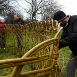 Working with volunteers to build a willow fence